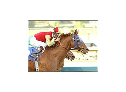 Star Cross (3) wins the San Pasqual Handicap by a nose over Nose The Trade, Saturday at Santa Anita.