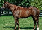 Congaree Sires First Winner