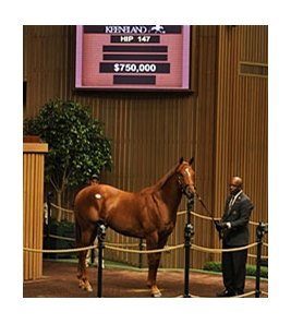 Hip 147 sold for $750,000 during session 2 of the Keeneland September Sale.