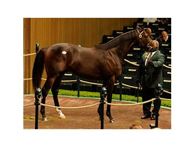 Hip 96 Giant's Causeway-Spunoutofcontrol sold for $950,000 at the Keeneland Yearling Sales