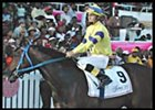 Blast of Storm, with J. Jones aboard, after winning the Sandy Lane Barbados Gold Cup.