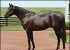 Walmac to Stand Sunday Silence's Champion Son, Hat Trick