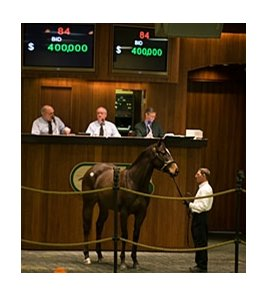 Filly; Harlan's Holiday - Burn Brightly by American Chance brought $400,000 during the Ocala Breeders' Sales Co. February select sale.