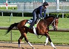 "Tencendur<br><a target=""blank"" href=""http://photos.bloodhorse.com/TripleCrown/2015-Triple-Crown/Kentucky-Derby-Workouts/i-3McQdW7"">Order This Photo</a>"