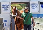 I'll Have Another arrives at Belmont Park.
