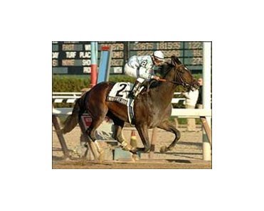Remsen winner Nobiz Like Shobiz shooting for Holy Bull.