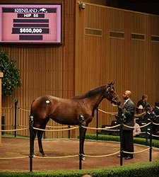 Ferguson Buys Street Sense Filly for $650,000