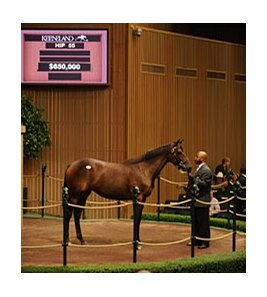 Hip 55 sold for $650,000 during the Keeneland September Sale.