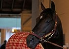 Grade I winner Gayego has earned more than $1.5 million in purses.