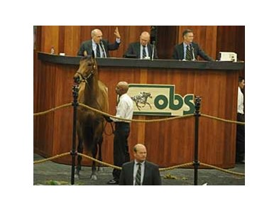 Hip 64, Red Vow, brought $625,000 early in the OBS March 2-year-old Sale.