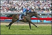 Local Horse Makybe Diva Upsets Melbourne Cup