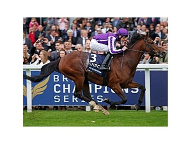 "Excelebration romps in the QIPCO Queen Elizabeth II Stakes.<br><a target=""blank"" href=""http://photos.bloodhorse.com/AtTheRaces-1/at-the-races-2012/22274956_jFd5jM#!i=2162143483&k=cJKtjVq"">Order This Photo</a>"
