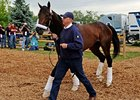 Super Saver Arrives in Good Order at Pimlico