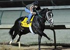 Flat Out working at Churchill Downs.