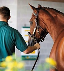 Outlook Positive for Yearling Selling Season