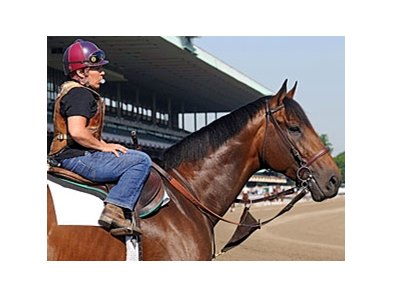 "First Dude at Belmont Park. <br><a target=""blank"" href=""http://www.bloodhorse.com/horse-racing/photo-store?ref=http%3A%2F%2Fpictopia.com%2Fperl%2Fgal%3Fprovider_id%3D368%26ptp_photo_id%3D9047694%26ref%3Dstory"">Order This Photo</a>"