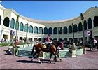 Horses parade around the walking ring at Gulfstream Park Wednesday.