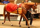 Danehill Dancer Colt Shines at Tattersalls