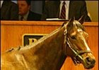 Cat Fighter, sold for $1.3-million at Barretts sale.