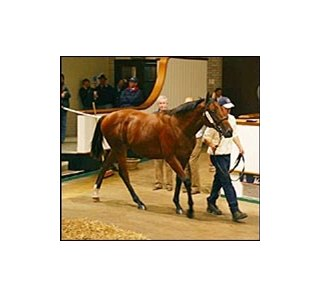 Record-breaking Diesis colt at Tattersalls October sale.