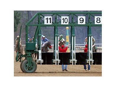 The gate crew at Oaklawn Park helps to stop the field after failing to remove the starting gate from the track during the ninth race on March 13.
