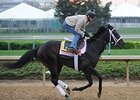 "Justwhistledixie at Churchill Downs<br><a target=""blank"" href=""http://www.bloodhorse.com/horse-racing/photo-store?ref=http%3A%2F%2Fpictopia.com%2Fperl%2Fgal%3Fprovider_id%3D368%26ptp_photo_id%3D8061017%26ref%3Dstory"">Order This Photo</a>"