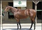 Broken Vow colt, brought top price at Fasig-Tipton Midlantic sale.
