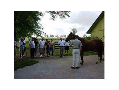 Veterans visit the horses at Runnymede Farm Aug. 28.