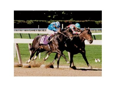 Safely Kept (right) defeated Dayjur in the 1990 Breeders' Cup Sprint.
