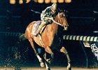 "1988 Breeders' Cup Classic winner and Horse of the Year Alysheba will reside at the Kentucky Horse Park.<br><a target=""blank"" href=""http://www.bloodhorse.com/horse-racing/photo-store?ref=http%3A%2F%2Fpictopia.com%2Fperl%2Fgal%3Fprovider_id%3D368%26ptp_photo_id%3D618090%26ref%3Dstory"">Order This Photo</a>"