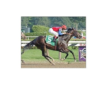 Medaglia d'Oro, favored to win Donn Handicap.