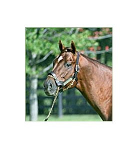 Distorted Humor, leading freshman sire for 2002.