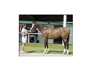 Songandaprayer filly, sold for $190,000.
