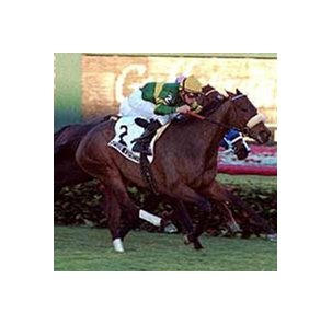 Spook Express, with Mike Smith riding, wins the Honey Fox Handicap over Please Sign In (behind Spook Express) Sunday at Gulfstream Park.