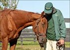 "Precisionist, with Old Friends' Michael Blowen, Tuesday afternoon.<br><a target=""blank"" href=""http://www.bloodhorse.com/horse-racing/photo-store?ref=http%3A%2F%2Fpictopia.com%2Fperl%2Fgal%3Fgallery_id%3D6305%26process%3Dgallery%26provider_id%3D368%26ptp_photo_id%3D571290%26sequencenum%3D%26page%3D"">Order This Photo</a>"
