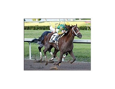 Dogwood Stable's Limehouse prominent among contestants in Sunday's Tampa Bay Derby.