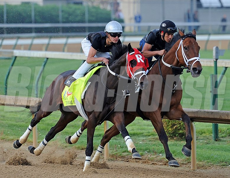 Louisiana Derby winner International Star (outside) and jockey Miguel Mena, works an easy 5 furlongs in company with stablemate Dreams Cut Short Saturday morning in 1: 01 3 at Churchill Downs April 28.