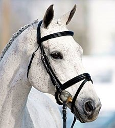 Courageous Comet Looking to Shine at WEG
