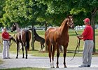 The Keeneland September yearling sale begins Monday, September 14.