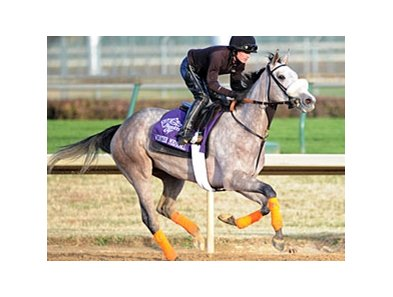 Winter Memories is the 2-1 morning line favorite in the BC Juvenile Fillies turf.
