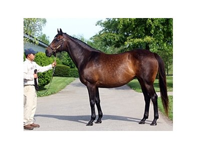 Arch's Gal Edith
