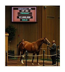 Camargue was purchased for $1,650,000 during the Nov. 8 session of the Keeneland November Breeding Stock Sale.