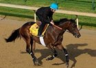 "Bob Black Jack during a pre-Kentucky Derby workout. <br><a target=""blank"" href=""http://www.bloodhorse.com/horse-racing/photo-store?ref=http%3A%2F%2Fpictopia.com%2Fperl%2Fgal%3Fprovider_id%3D368%26ptp_photo_id%3D4335627%0D%0A%26ref%3Dstory"">Order This Photo</a>"
