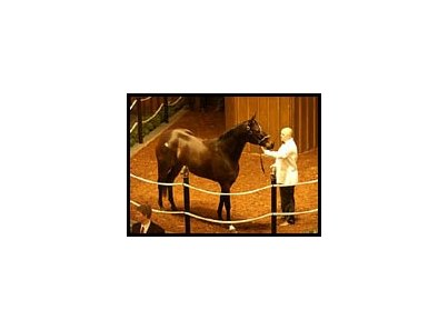 Above Perfection, sold for $610,000 at Fasig-Tipton Kentucky sale.