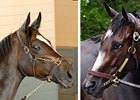 Zenyatta (left) and Rachel Alexandra (right) are the leading candidates for Horse of the Year.
