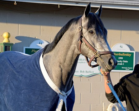 El Kabeir at Churchill Downs on April 27, 2015, in Louisville, KY, in preparation for the Kentucky Derby.