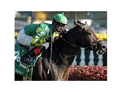 Six-year-old Unbridled Sidney won five turf stakes in her career.