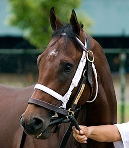 The Leopard, who finished 7th in the Breeders' Cup Juvenile Turf, is a leading contender in the Generous.