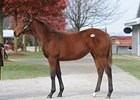 Zenyatta's Half Sister Brings $1.5 Million