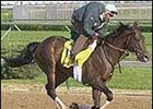 Champion Anees, euthanized Saturday.
